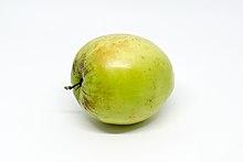 Indian jujube (fruit)